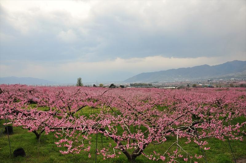 塩ノ山ワインフェス